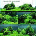 前景で使用するオススメ水草ランキング